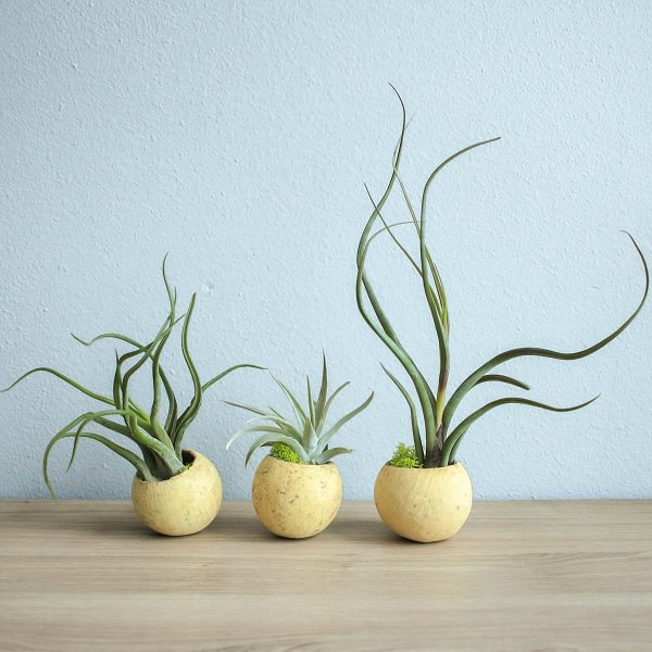 how much light air plants need